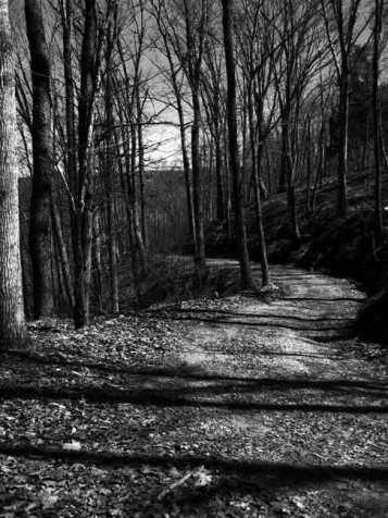 Buckingham_Road_Dark Woods